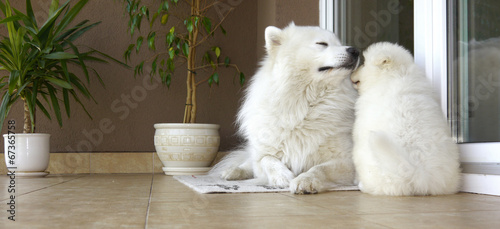 canvas print picture dogs