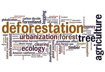 Deforestation - word cloud
