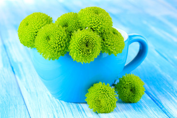Beautiful green chrysanthemum in cup on table close-up
