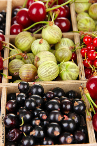 canvas print picture Different summer berries in wooden crate, close up