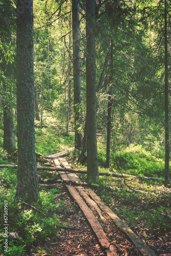 Hiking path through forest, vintage editing style