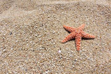 Starfish Corner