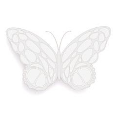 Butterfly abstract on a white background, vector illustration