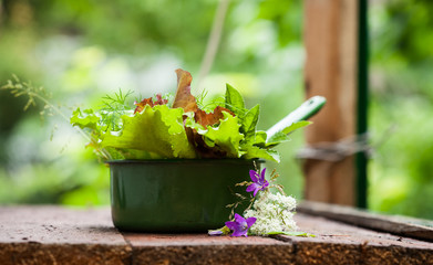 Fresh lettuce in the garden.