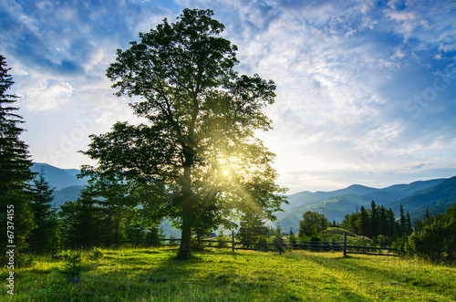 Carpathian krajobraz górski z drzewa