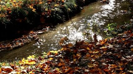 Herbst 9