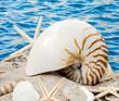 Sand, Meer, Nautilus und Seesterne :)