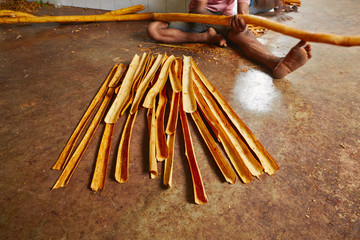 Cinnamon workshop