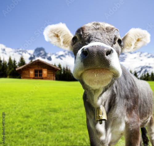 Deurstickers Alpen Jungvieh auf der Alm