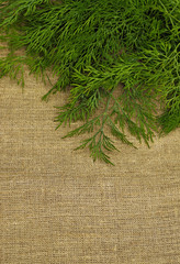 Green dill on the rough fabric as the background