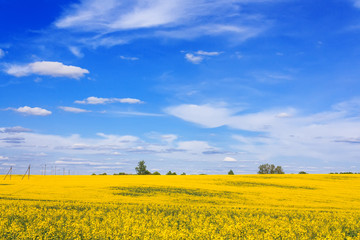 Blooming field and beautiful sky