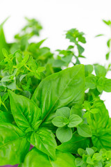 Green herbs: basil, oregano and thyme