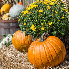 Farm Pumpkins