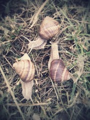 Group of snails in the grass