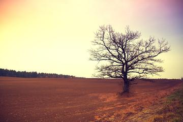 Bare tree in a field