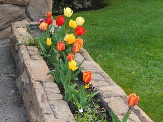Cantero de tulipanes