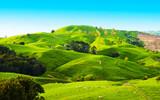 Hills of the New Zea...
