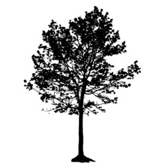 Tree Silhouette Isolated on White Backgorund. Vecrtor Illustrati
