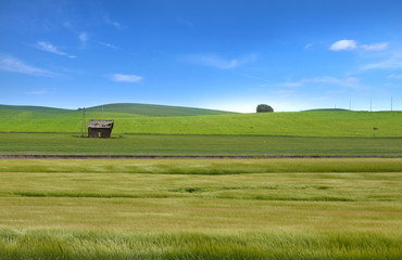 Wheat fields in Palouse,WA
