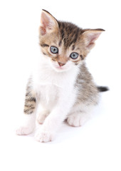 Cute little kitten, isolated on white
