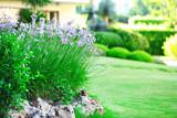 Fototapety Beautiful landscaping in garden