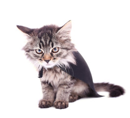 Cat in black cloak, isolated on white.
