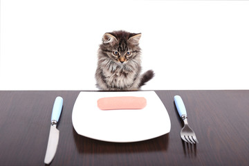Cute kitten with delicious sausage on plate, isolated on white