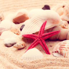 shell and starfish on beach