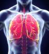 Human Respiratory System - 67395523
