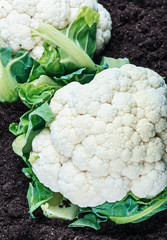 cauliflower on the ground