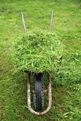 wheelbarrow with fresh green grass