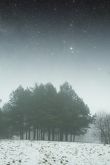 winter night in the park. Elements of this image furnished by NA