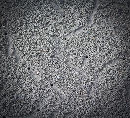 Crab making sand balls on the beach
