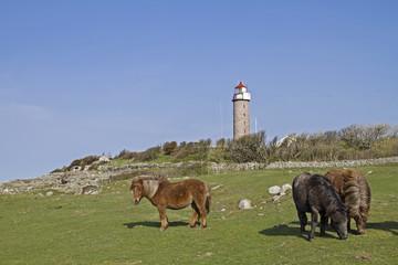 Leuchtturm Lysta Fyr und Ponies