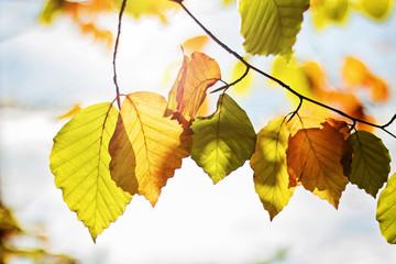 Herbstanfang im Wald