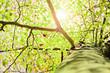 Herbstlicht im Baum – Version 3