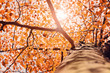canvas print picture - Herbstlicht im Baum – Version 2