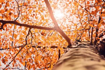 Herbstlicht im Baum – Version 2