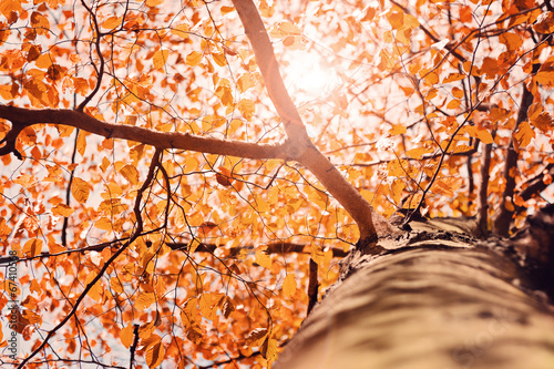 canvas print picture Herbstlicht im Baum – Version 2