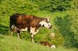 Animal ferme 121