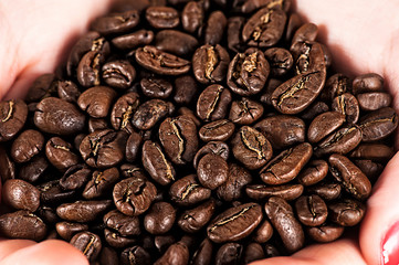 selected coffee beans in hands