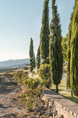 Alley of cypresses in Pamukkale during irrigation