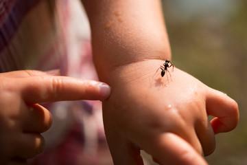 子供の手に乗る蟻