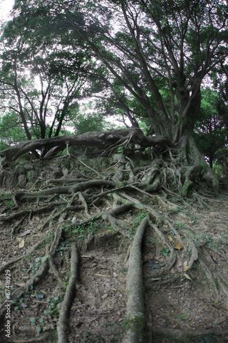 大地に根を張る樹木