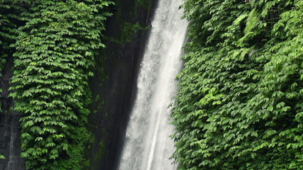 Beautiful waterfall in tropical forest in Bali