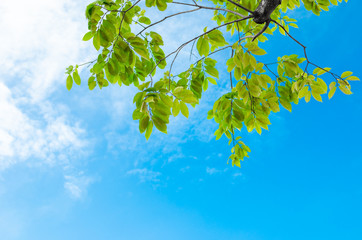 Look up view, Green tree against nice sky
