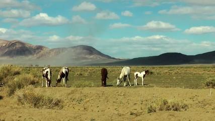 Pferde in der Wüste horses in the desert