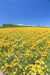 色彩の丘の花畑
