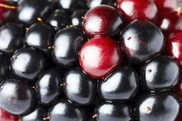 ripe blackberry