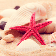 shell and starfish on beach  with a retro vintage instagram filt